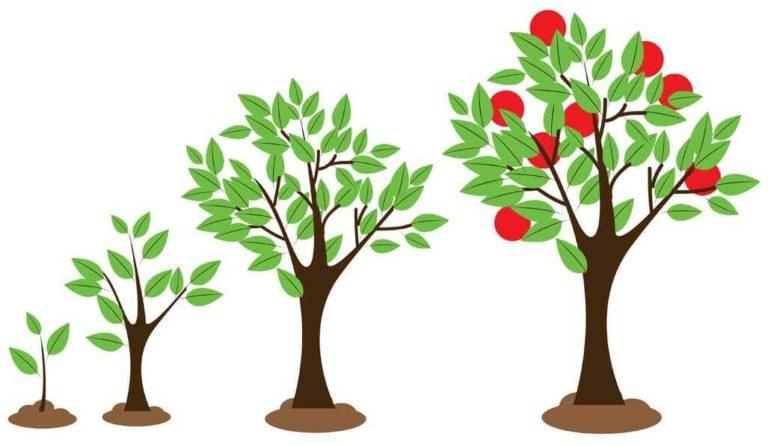 И летом сажают деревья