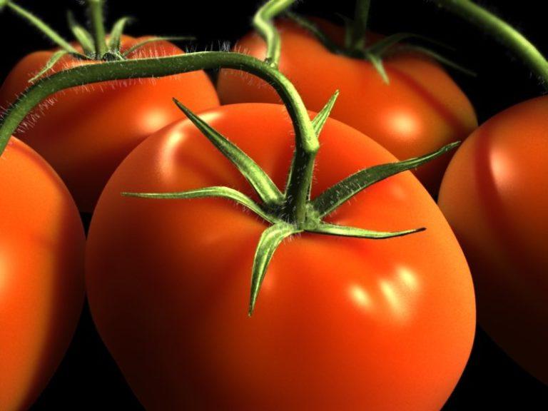 Каждому овощу - свое время для сбора урожая