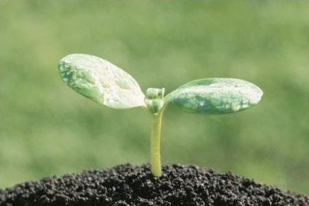 Почва для рассады своими руками
